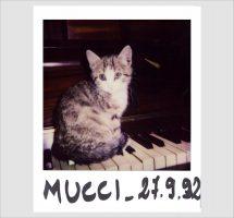 Mucci-ALBY-Studio